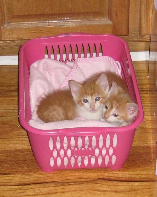 basket-of-kittens