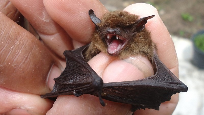 bats-for-xray
